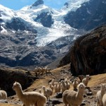 BETOVEREND PERU (video)