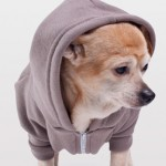 AMERICAN APPAREL DOG CONTEST