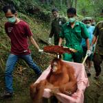 BEAUTYMERK FAT FOREST REDT HET REGENWOUD